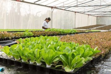 Ministarstvo poljoprivrede povećava financijska sredstva za nove natječaje za 650 milijuna kuna 9