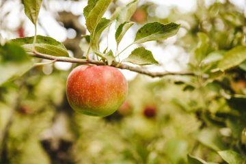 Anketa - Proizvođačke organizacije u sektoru voća i povrća 6