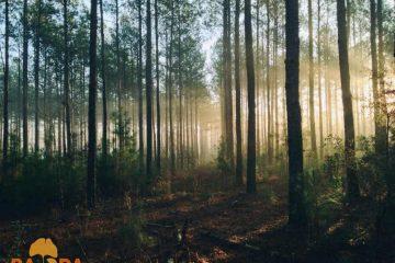 Uspostava grupa i organizacija proizvođača u poljoprivrednom i šumarskom sektoru 1
