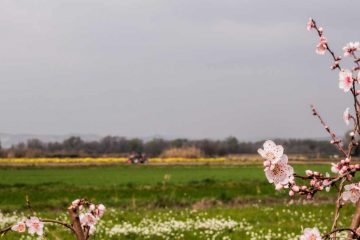 Samoopskrbno poljoprivredno gospodarstvo - sličnosti i razlike sa OPG-om 4