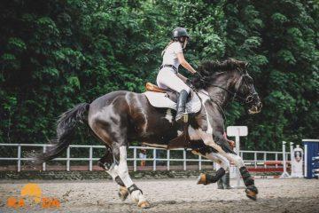 Provedba mjera novog Nacionalnog programa poticanja provedbe uzgojnih programa za toplokrvne pasmine konja u Republici Hrvatskoj 2021. – 2025. 4
