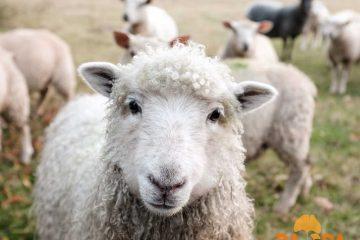 """Natječaj za provedbu tipa operacije 6.1.1 """"Potpora mladim poljoprivrednicima"""" 4"""